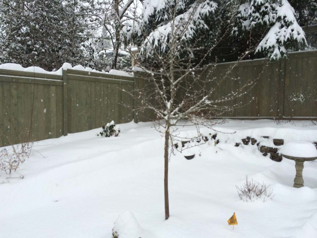 carpentry with snow landscape design