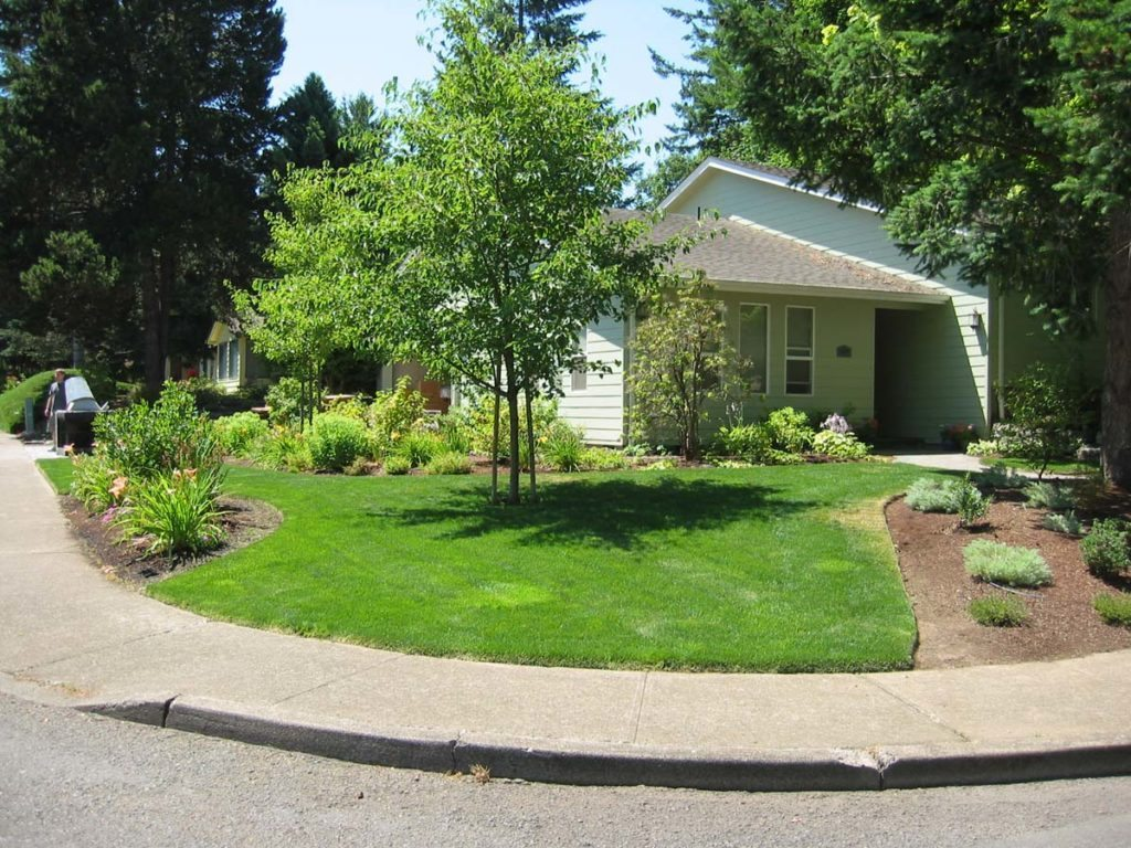 sideyard landscape design with lawn