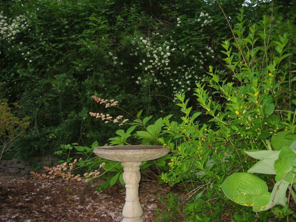 bird bath landscape design