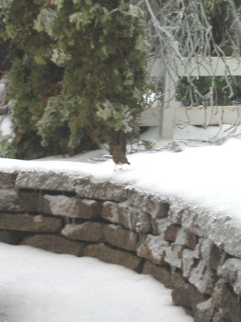 bird in snow on retaining wall landscape design