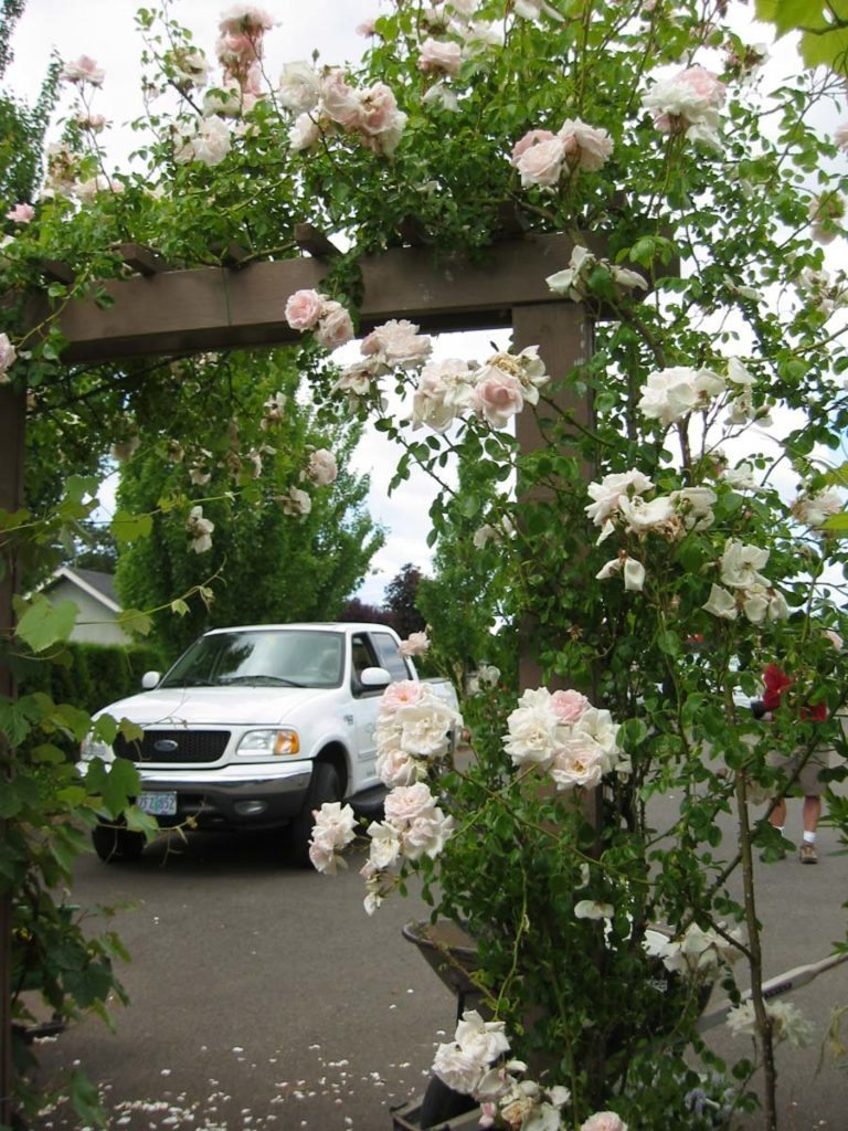 arbor with flowers landscape design