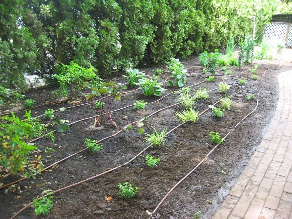 drip system irrigation for new landscape plan 4