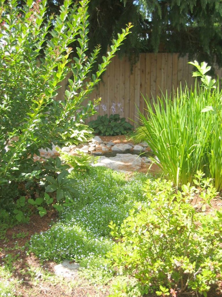 water feature borders new plants in landscape design