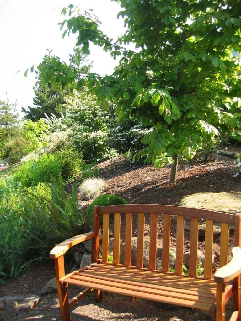 garden bench with parrotia persica behind in landscape