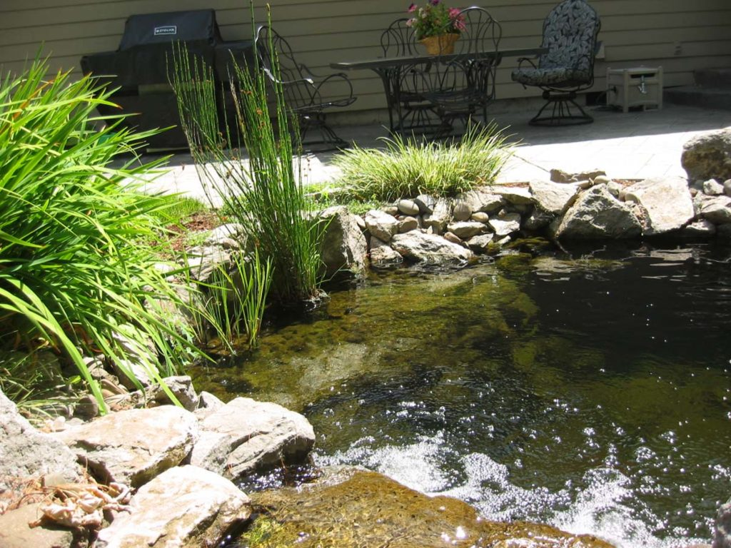 new pond with water feature and fish in salem oregon 12