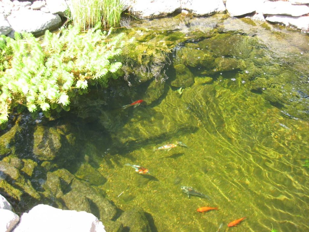 new pond with water feature and fish in salem oregon