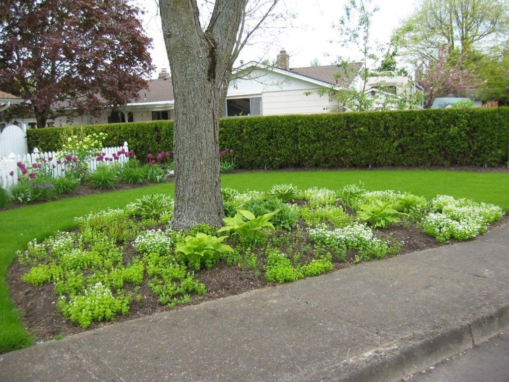 front landscaping design with grass lawn 2