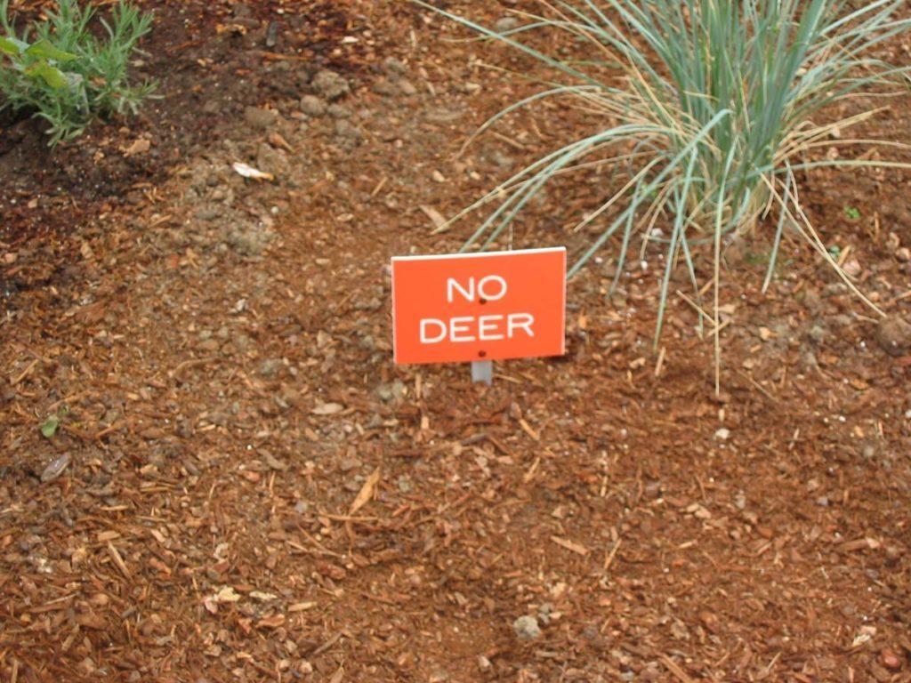 no deer sign in landscape salem