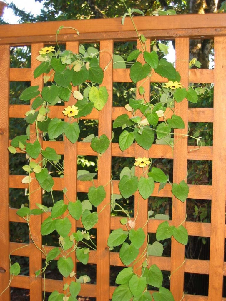 trellis screen and foliage landscape design