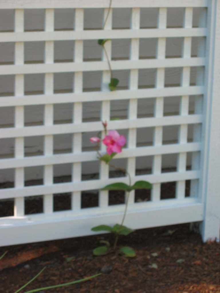 trellis screen and flower in salem oregon