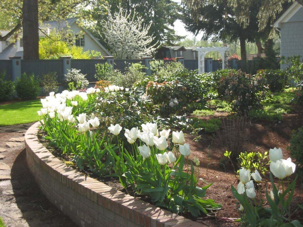 plants tulipa 'emperor'