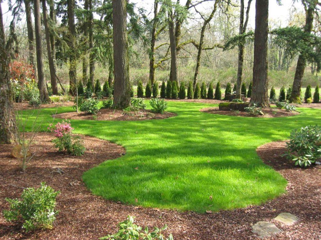 landscape woodland planting salem