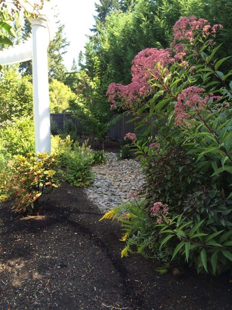 rain garden planting with pergola landscape design