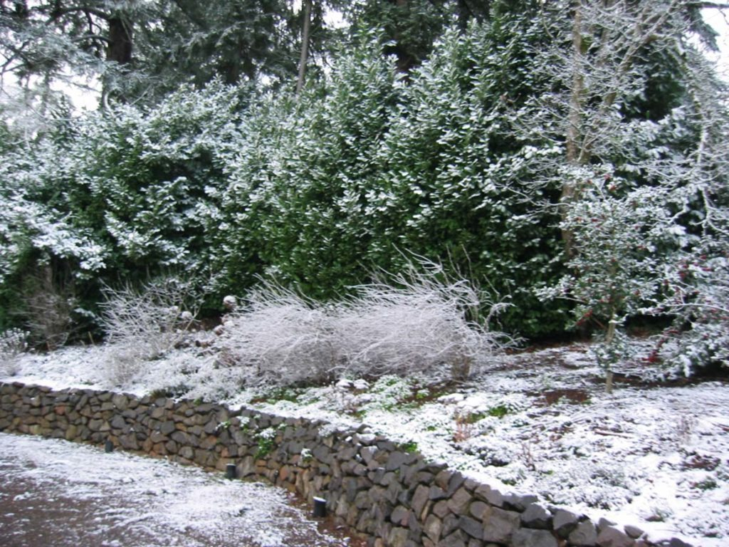 winter wall with snow landscape design