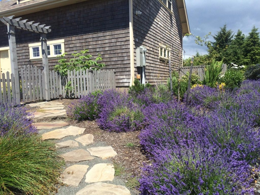 split stone pathway and lavender landscape