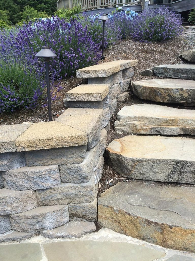 garden wall with slab steps and lavender landscape